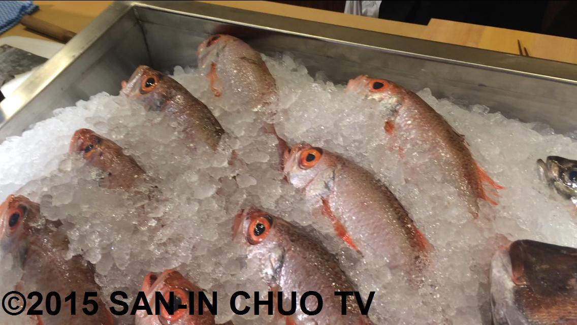 pride-fish-japan-1